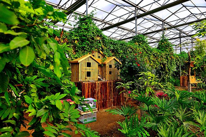 北京呀路古热带植物园