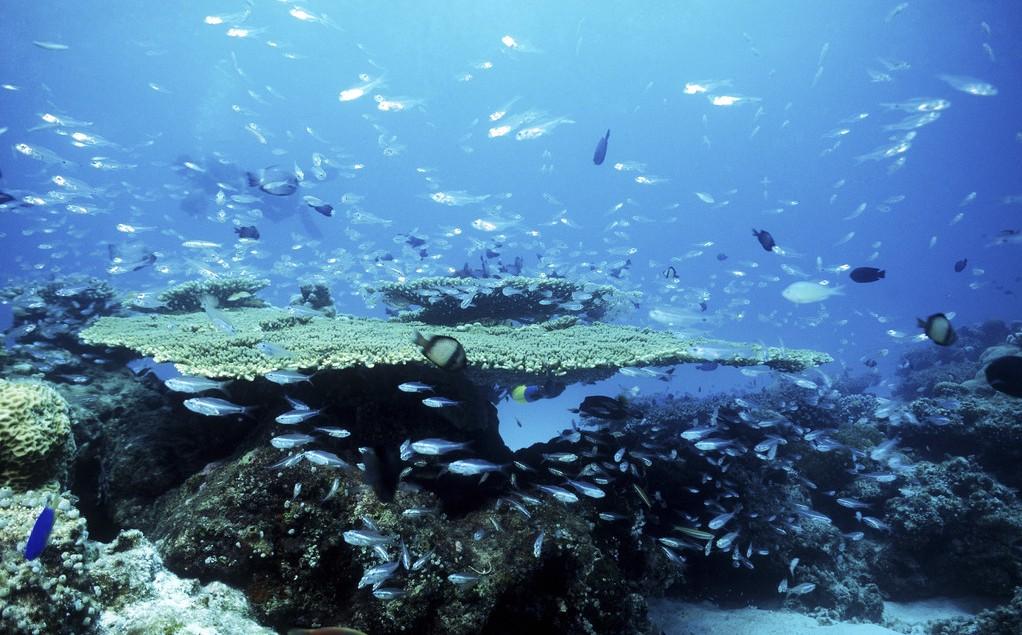 太平洋海底世界